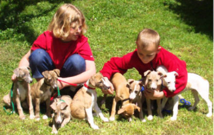 Ici, les chiots ont 8 semaines